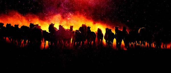 Blazing Group Of Horses Running